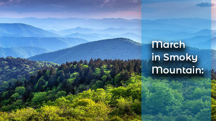March-in-Smoky-Mountain