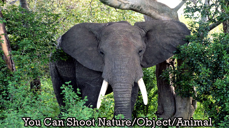 You-Can-Shoot-Nature-Object--Animal