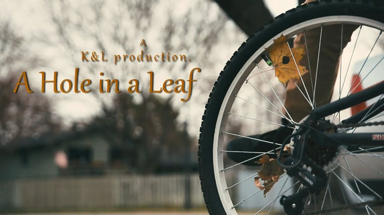 a-hole-in-a-leaf